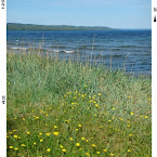 20120523-01-dandelion-beach.jpg