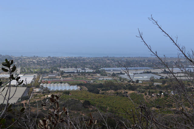 Carpinteria greenhouses and orchards