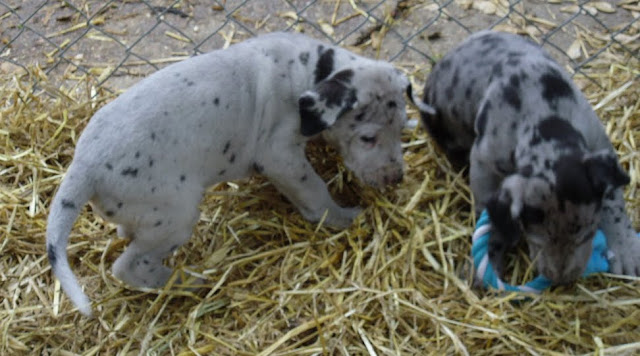 Thelma & Garths 3/21/12 litter - SAM_3318.JPG