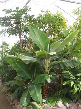 2010.08.13-003 plantes utiles
