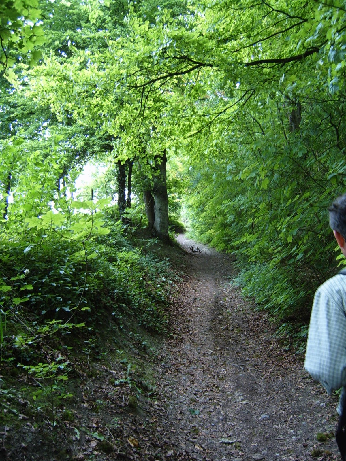 walk 29 am path up to ridge after lunch.JPG