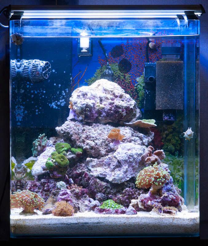 Mon Nano Récif 60 litres (BAC ARRETE) DSC_1263