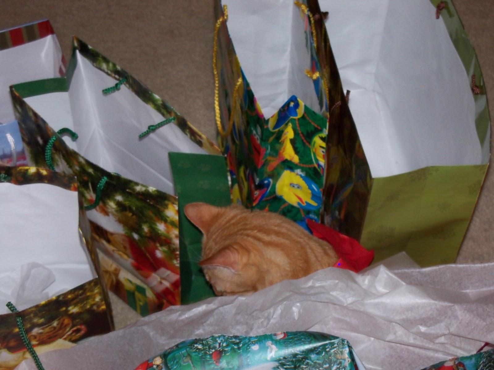 Christmas 2010 - 100_6413.JPG