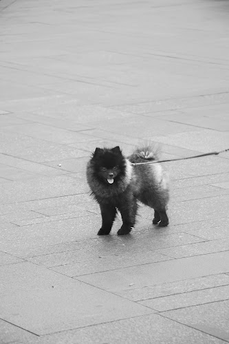 Dog, Prague