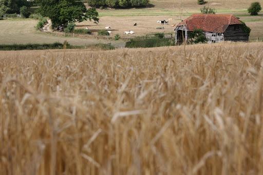 1008 001 Henley via Hambleden Circular, The Thames Valley, England