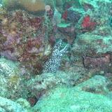 Bonaire 2011 - PICT0210.JPG