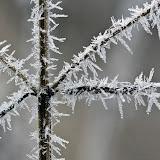 Makroaufnahmen im Winter...