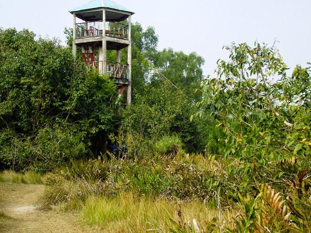 Watch-tower inside Sundarbans