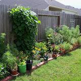 Gardening 2010, Part Three - 101_3818.JPG