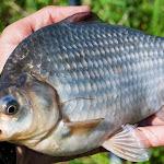 20140730_Fishing_Tuchyn_072.jpg