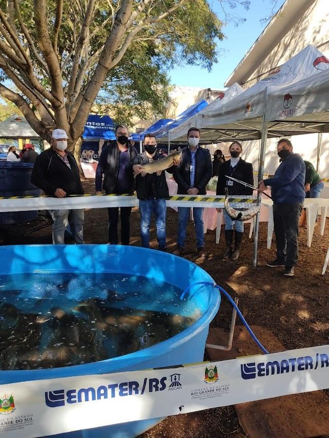 Cristal do Sul Promoveu Feira do peixe Artesanato e Agricultura Familiar