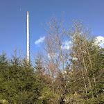 Der erste abgestorbene Baum, die um den Brocken durch Windbruch vor einigen jahren sehr häufig sind.