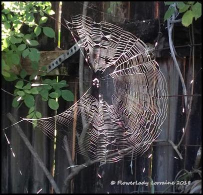 02-22-spider-web