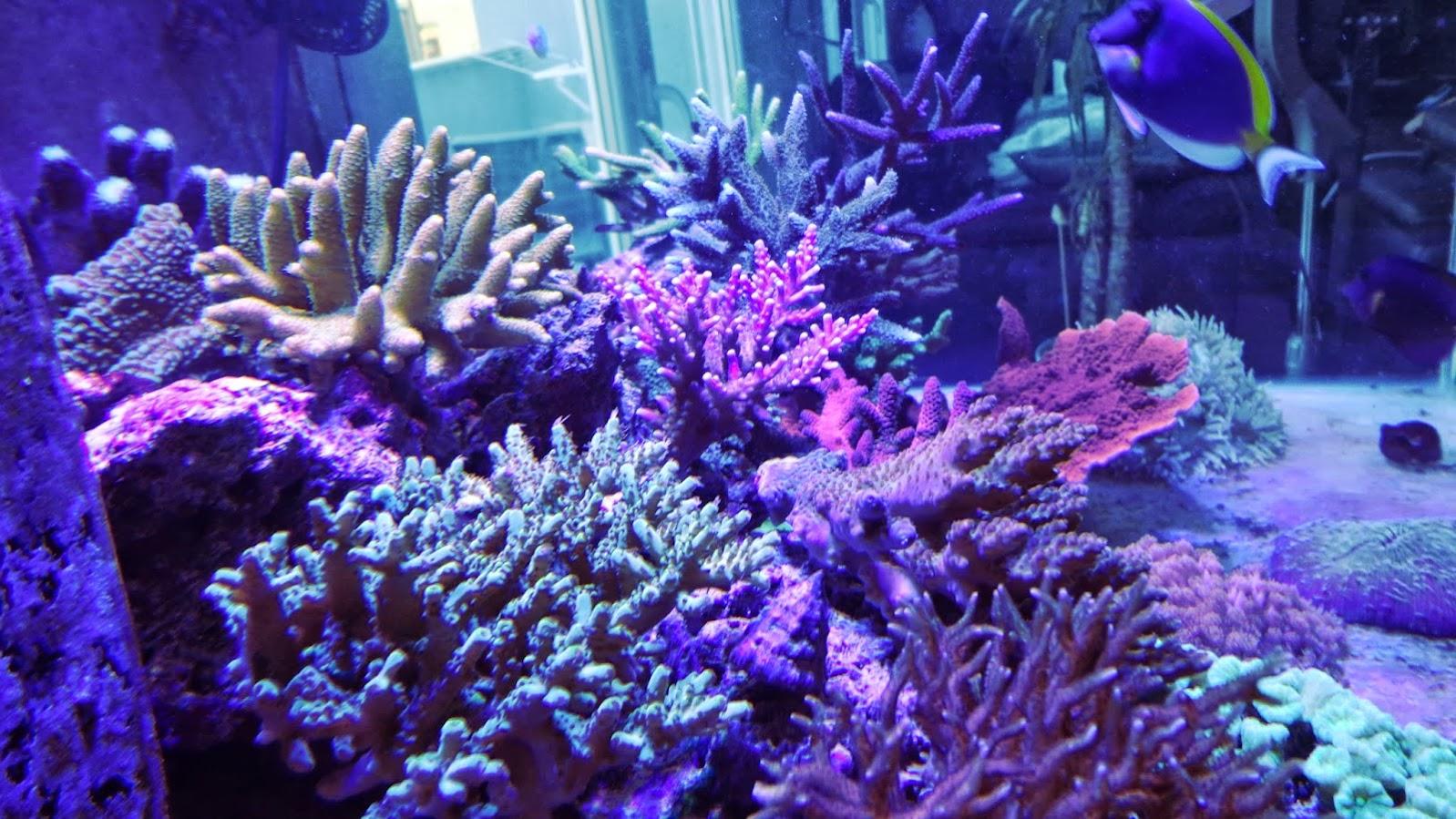 400 litres d'octopus 7DSC01092