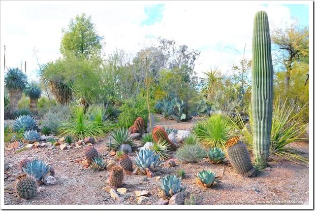 151229_Tucson_GregStarr_0048