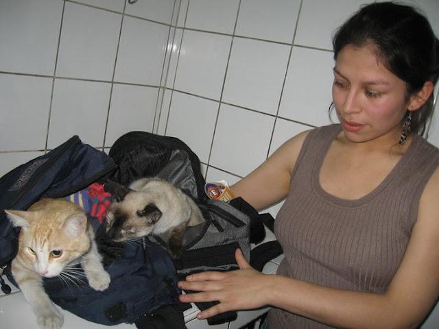 Dos pacientes con su mamá esperando ser esterilizadas en la Vet Zárate.
