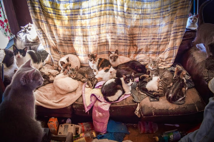 108 cats removed from hoarders' home in Texas