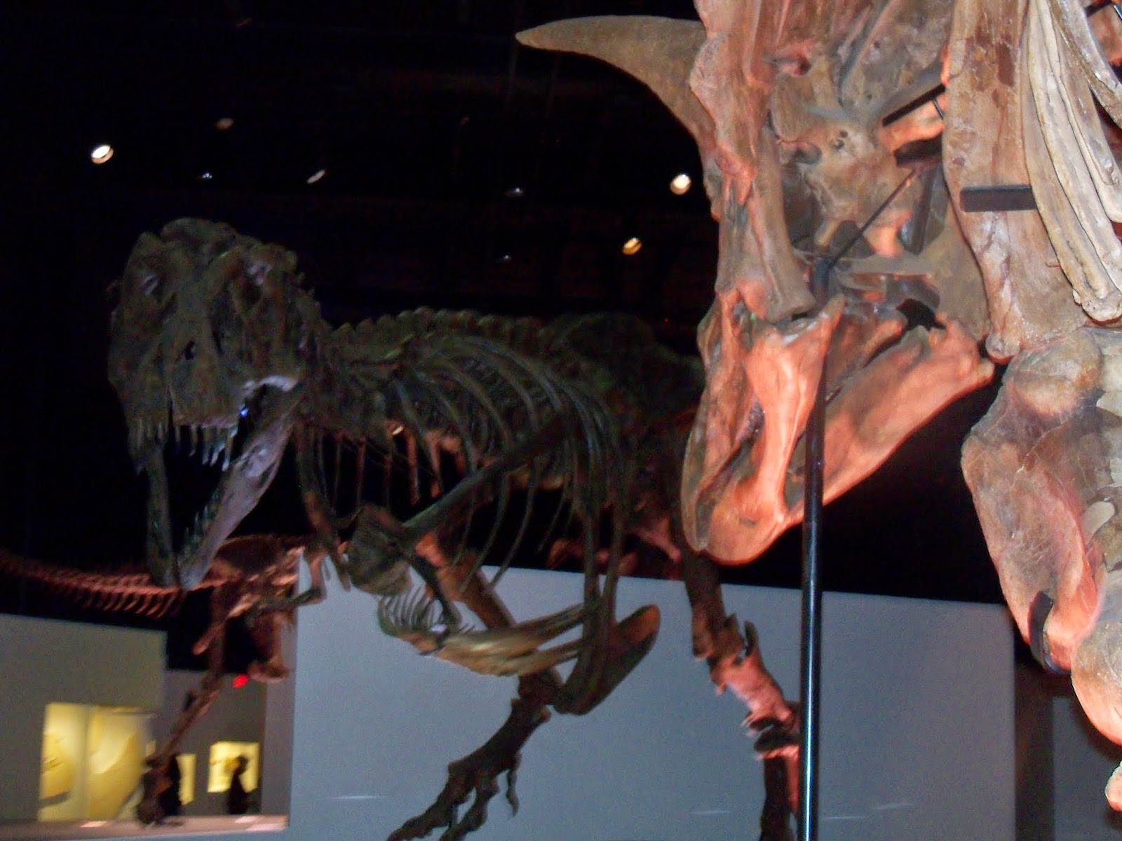 Houston Museum of Natural Science - 116_2683.JPG
