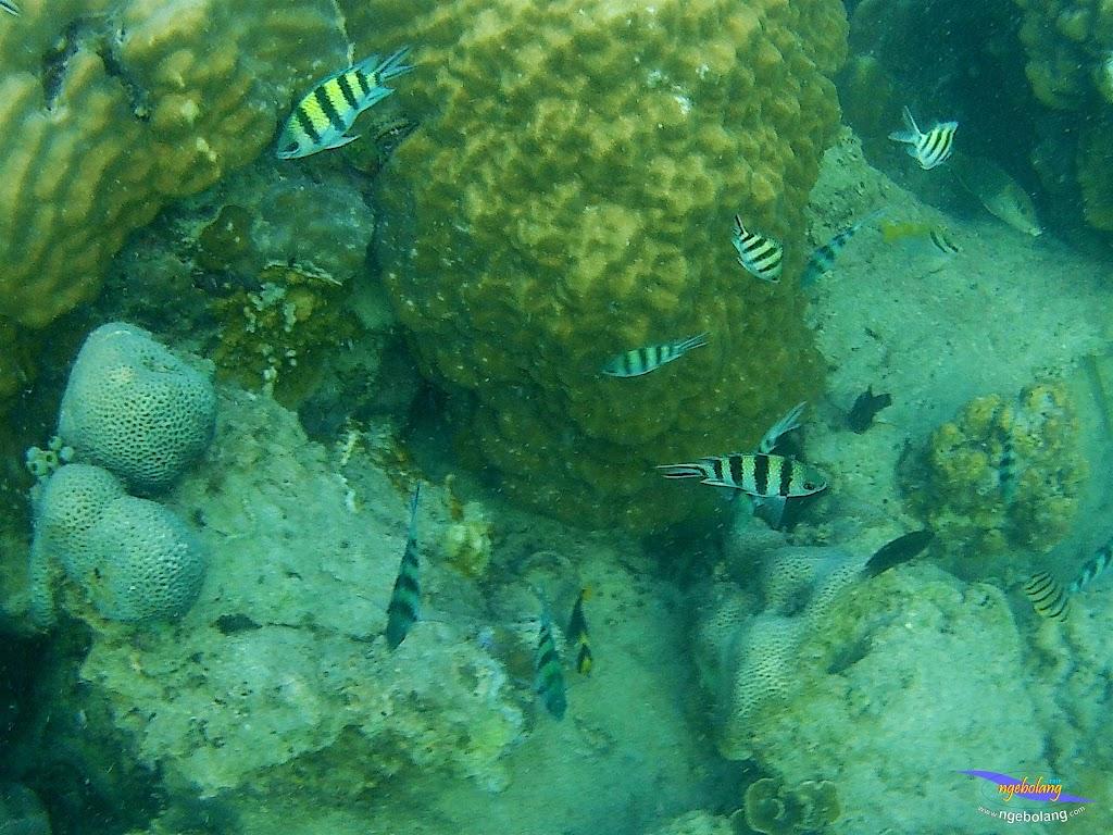 family trip pulau pari 090716 GoPro 46