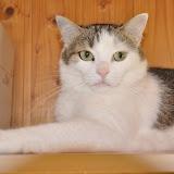 gatti 2012/2