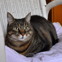 2015-1 gatti