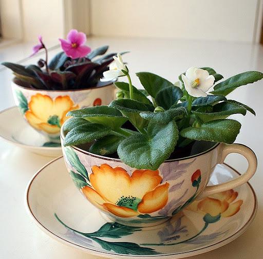flor violeta plantadas em xícaras