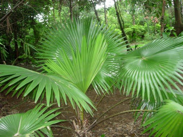 Grow Fresh Air Plants - DSCN3157.JPG