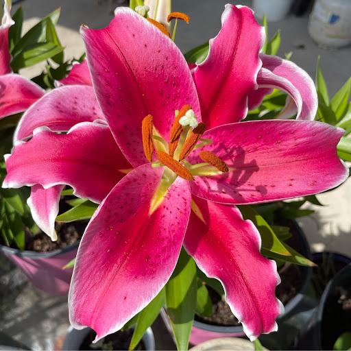 Gail Cavalier