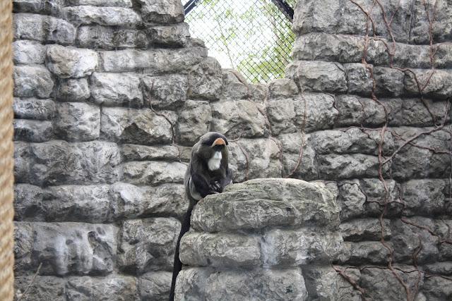 Zoo Snooze 2015 - IMG_7309.JPG
