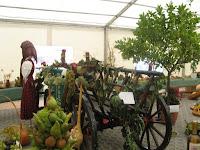11Gyümölcs és zöldségkiállítás képei.jpg