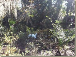 20151030_ Magnolia Plantation garden walk 1 (Small)