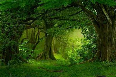 hoia baciu ! होया बस्यु एक रहस्यमयी जंगल | hoia baciu forest in hindi