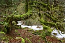 Barranco de Espata - Selva de Oza (Huesca)