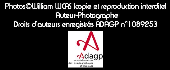 droits-d-auteur-copyright-adagp.png