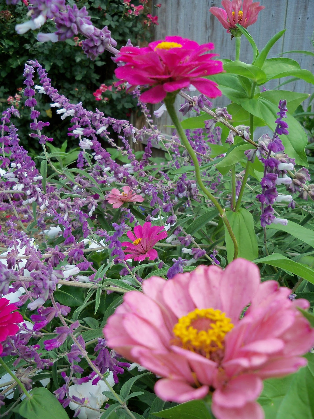 Gardening 2012 - 115_1669.JPG