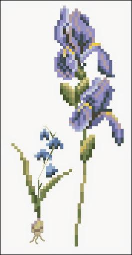Violet flower chart