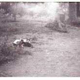 n010-022-1966-tabor-sikfokut.jpg