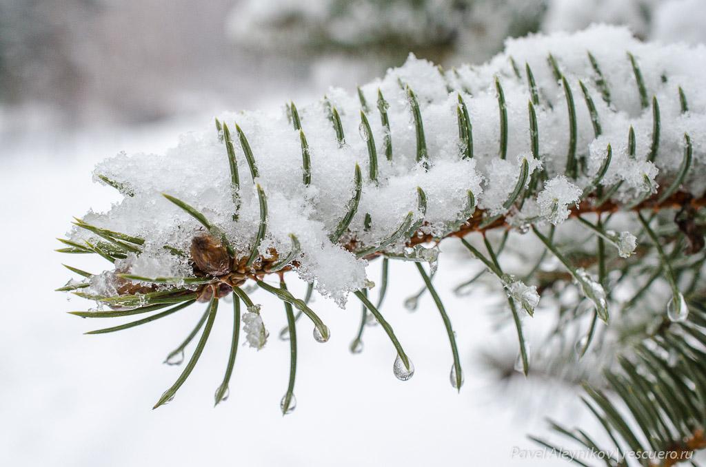 Снег на ёлке