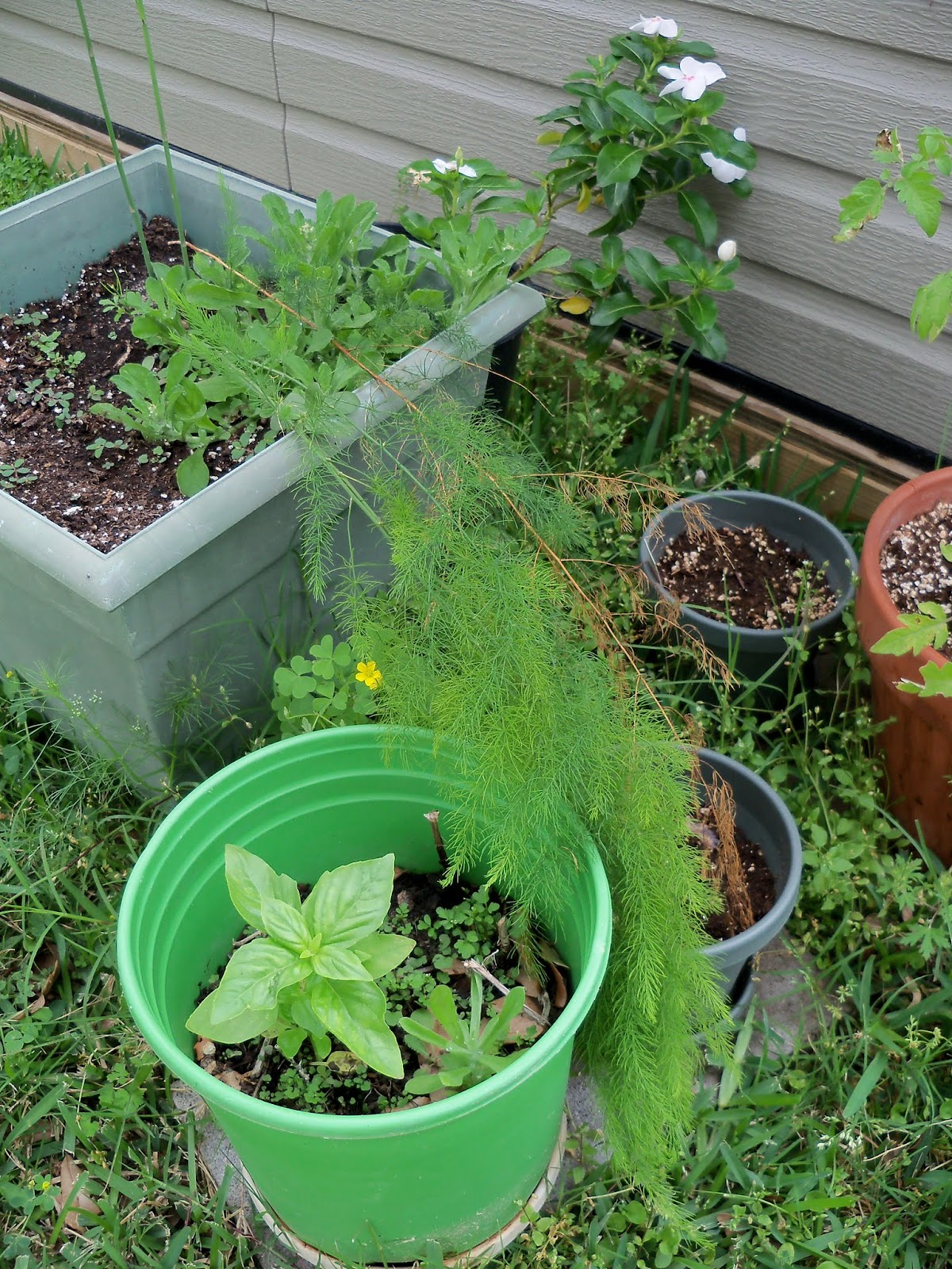 Gardening 2013 - 115_6050.JPG