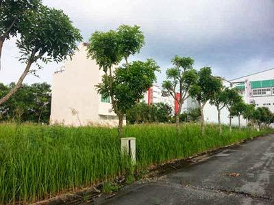 Nền đất dự án KDC Greenlife 17C -  Nguyễn Văn Linh