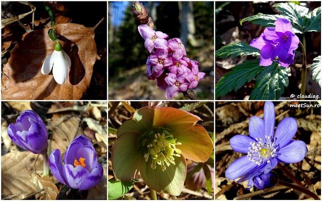 postavaru-flori-martie-rw.jpg