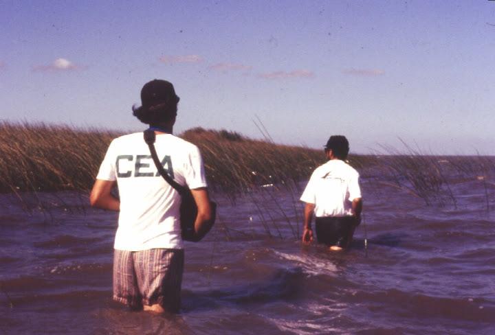 Atividade de campo, década de 90