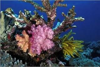 pulau liwutongkidi wisata sulawesi