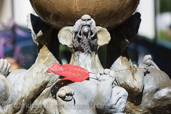 leaf on rat fountain