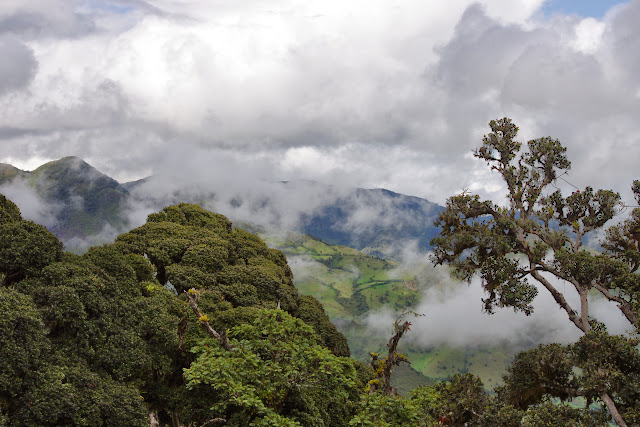 Forêt des nuages au-dessus de La Merced de Buenos Aires, 3400 m (Imbabura, Équateur), 25 novembre 2013. Photo : J.-M. Gayman