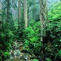 apakah hutan itu? Manfaat hutan dalam kehidupan sosial dan ekonomi