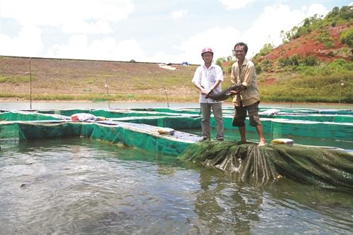 Kỹ thuật, kinh nghiệm nuôi cá tầm - 570615b100539