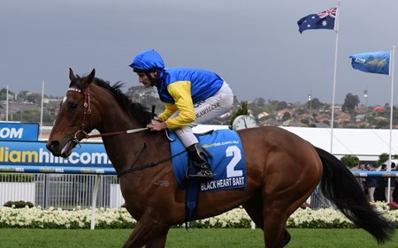 cox plate_black heart bart 1