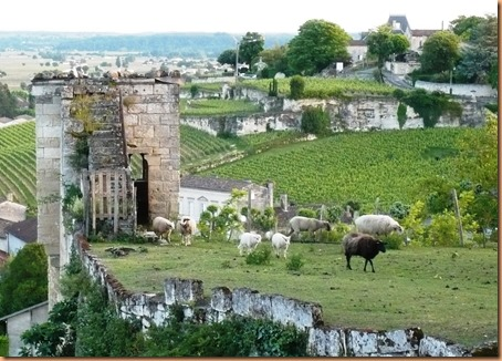 St Emilion views7