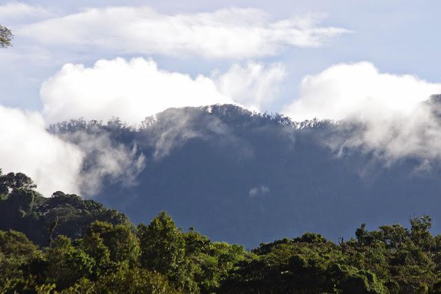 Mount Totumas, 1900 m (Chiriquí, Panamá), 25 octobre 2014. Photo : J.-M. Gayman